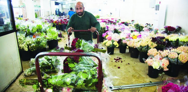 cut flower sector